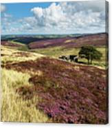 Top Withins On Haworth Moor Canvas Print