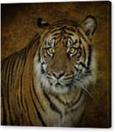 Topaz Tiger  Canvas Print