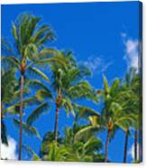 Tops Of Palms Canvas Print
