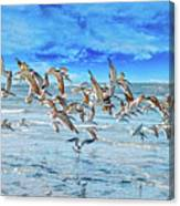Topsail Skimmers Canvas Print