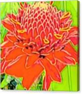Torch Ginger Aloha Canvas Print