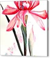 Torch Ginger Lily   2 Canvas Print