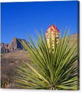 Torrey Yucca Canvas Print