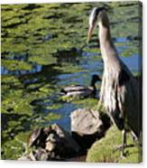Tortoise And The Heron Canvas Print