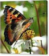 Tortoise Butterfly Canvas Print