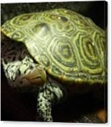 Turtle With A Tale To Tell Canvas Print