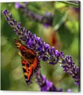 Tortoiseshell Butterfly On Lavender Canvas Print