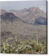 Tortolita Mountains Snowy Sunrise Canvas Print