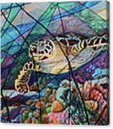 Tortuga Carey Canvas Print