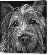 Tosha The Highland Terrier Canvas Print