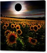 Total Eclipse Over The Sunflower Field Canvas Print