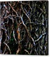 Totally Twisted In Yellow Springs Canvas Print