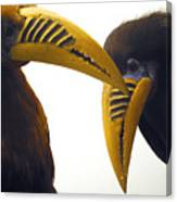 Toucan Play At That Game Canvas Print