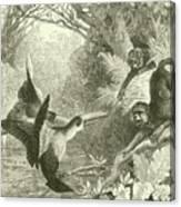 Toucans And Monkeys Canvas Print