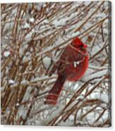 Touch Of Red For An Icy Morning Canvas Print