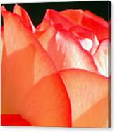 Touch Of Rose Canvas Print
