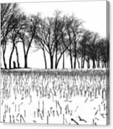 Touch Of Winter Blk N Wht Canvas Print
