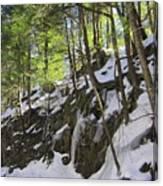 Tough Trees Canvas Print