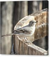 Townsends Solitaire Canvas Print