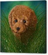 Toy Poodle Puppy Canvas Print