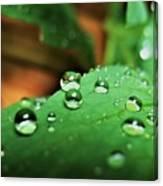 Traces Of Rain Canvas Print