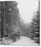 Track, Winter, Slaley Woods Canvas Print