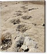 Tracks In The Desert 6 Canvas Print