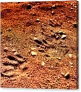 Tracks On Mars Canvas Print