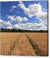 Tracks Through Wheat Field Canvas Print