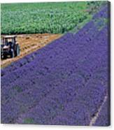 Tractor In A Lavender Field Canvas Print