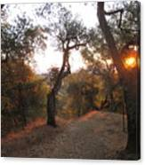 Trail At Sunrise Canvas Print
