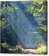Trail In Morning Light Canvas Print