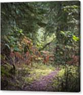 Trail In The Forest Canvas Print