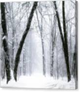 Trail Through The Winter Forest Canvas Print