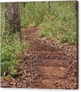 Trail To Beauty Canvas Print