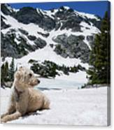 Traildog In Snow At Missouri Lakes Canvas Print