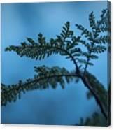 Trailside Foliage Canvas Print