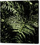 Tranquil Botanical Ferns Canvas Print