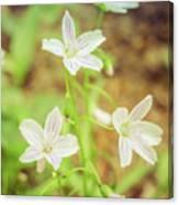 Tranquil Carolina Spring Beauty Canvas Print