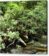 Tranquil Mountain Laurel Stream In The Great Smoky Mountains National Park Canvas Print