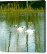 Tranquil Reflection Swans Canvas Print