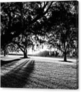 Tranquility Amongst The Oaks Canvas Print