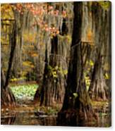 Tranquility In The Cyoress Forest Canvas Print