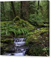 Tranquility In The Forest Canvas Print