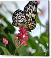 Translucent Butterfly Canvas Print