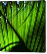 Translucent Green Canvas Print