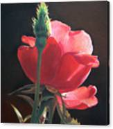 Translucent Rose Canvas Print
