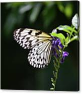 Translucent Wings On A Rice Paper Butterfly Canvas Print
