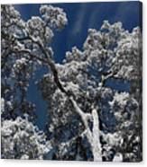 Trapped In Ice Canvas Print