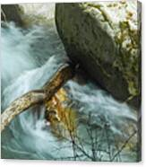 Trapped River Log Canvas Print